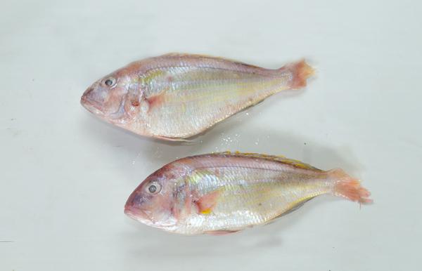 Japanese Threadfin Bream