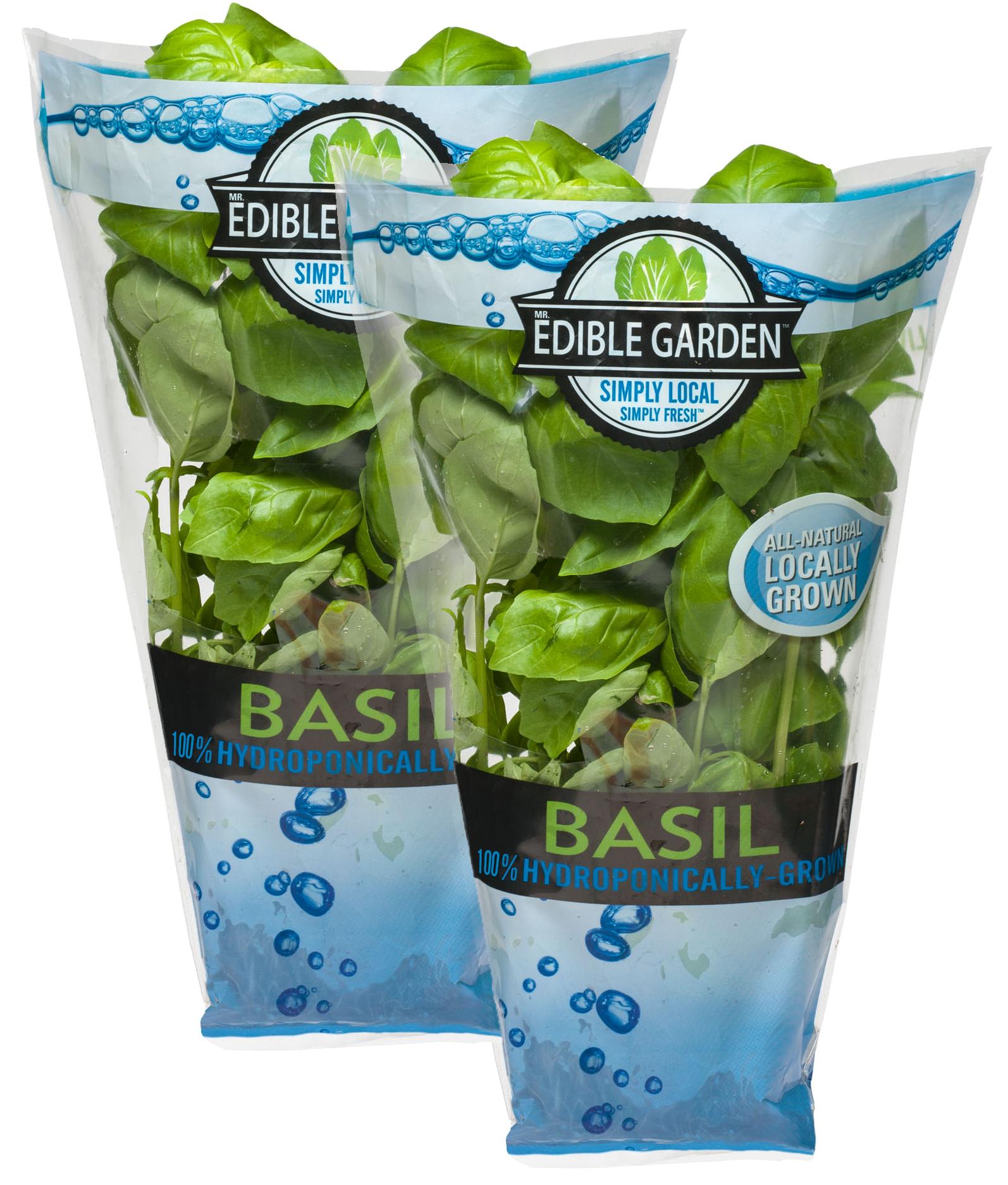 Living Basil