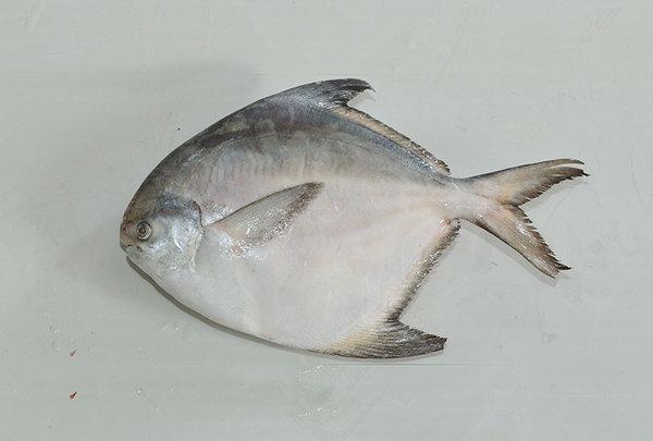 Silver Pomfret