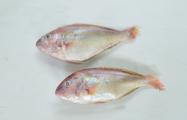 Japanese Threadfin Bream