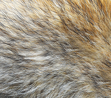 VF Corporation Prohibits Use of Fur in Products, Emphasizes Ethical Treatment of Animals with New Materials Policy