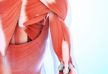 Sarcopenia and the FDA: A Time for Change?