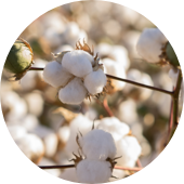 Addressing human rights violations in the cotton supply chain