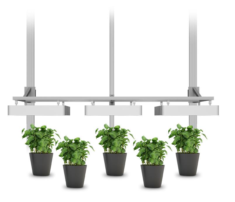 hydroponic growth