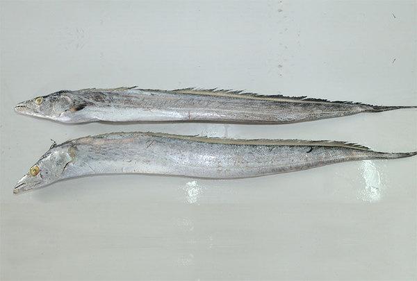 Ribbon Fish